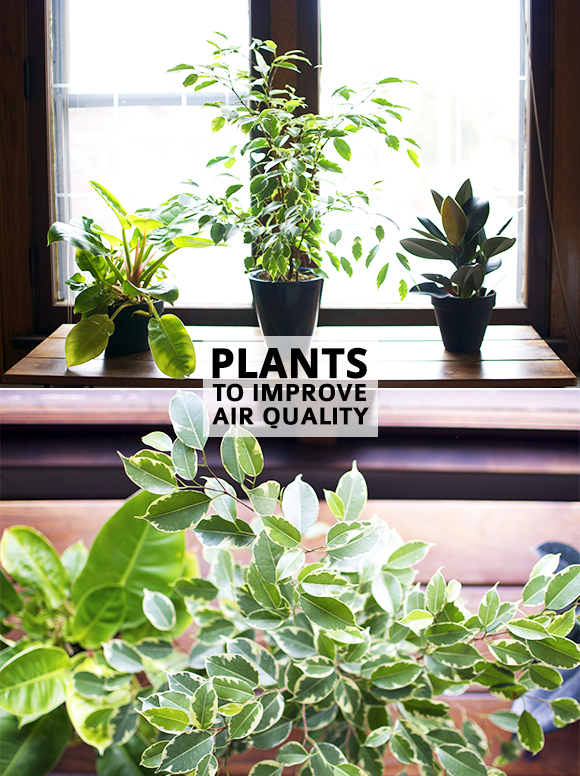 How houseplants can improve air quality in the home - Plants can improve ambience home ...