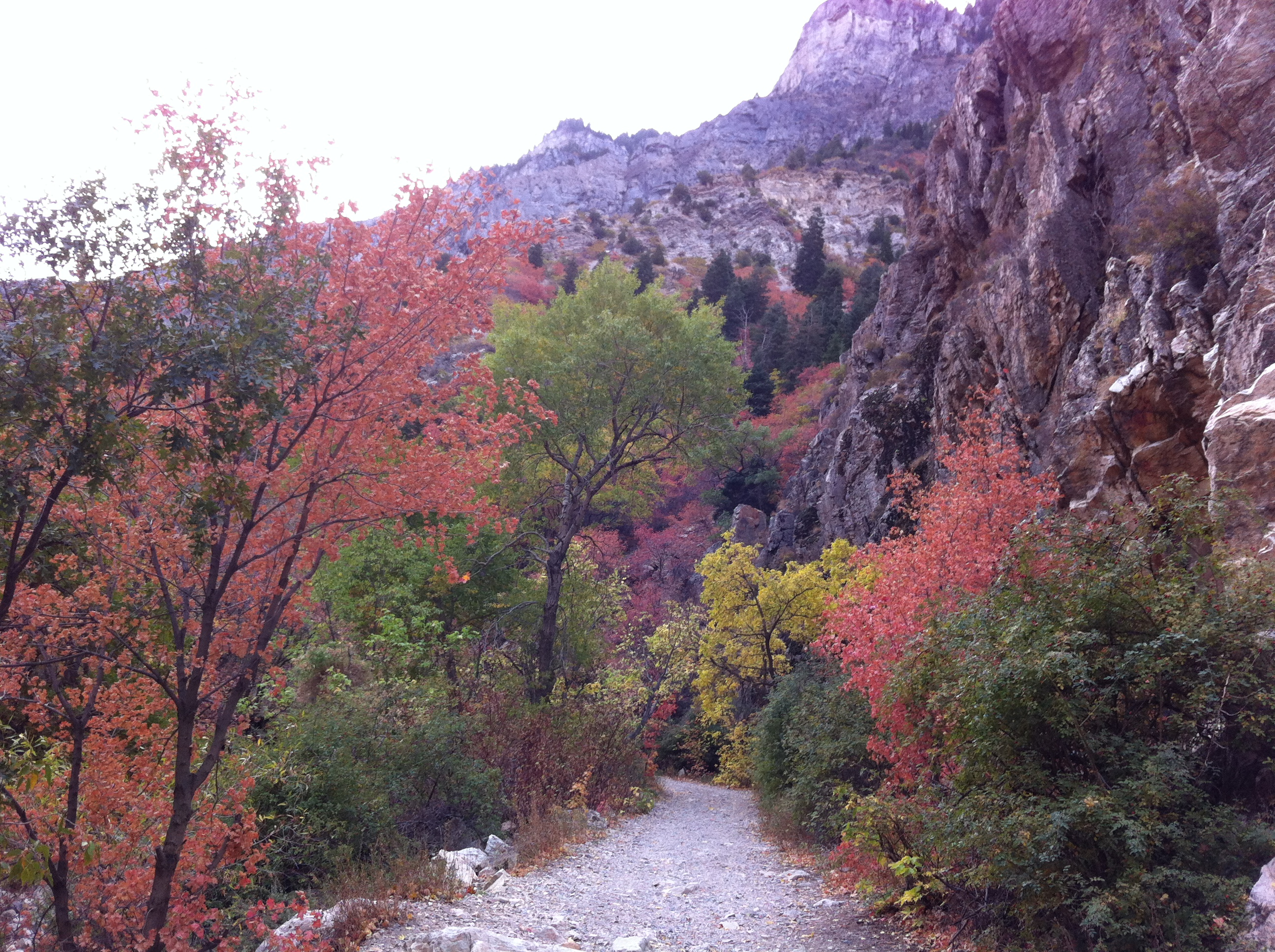 what i love about my neighborhood – fall