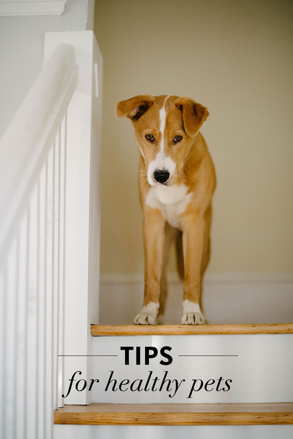 Tips to Keep Your Pets Healthy