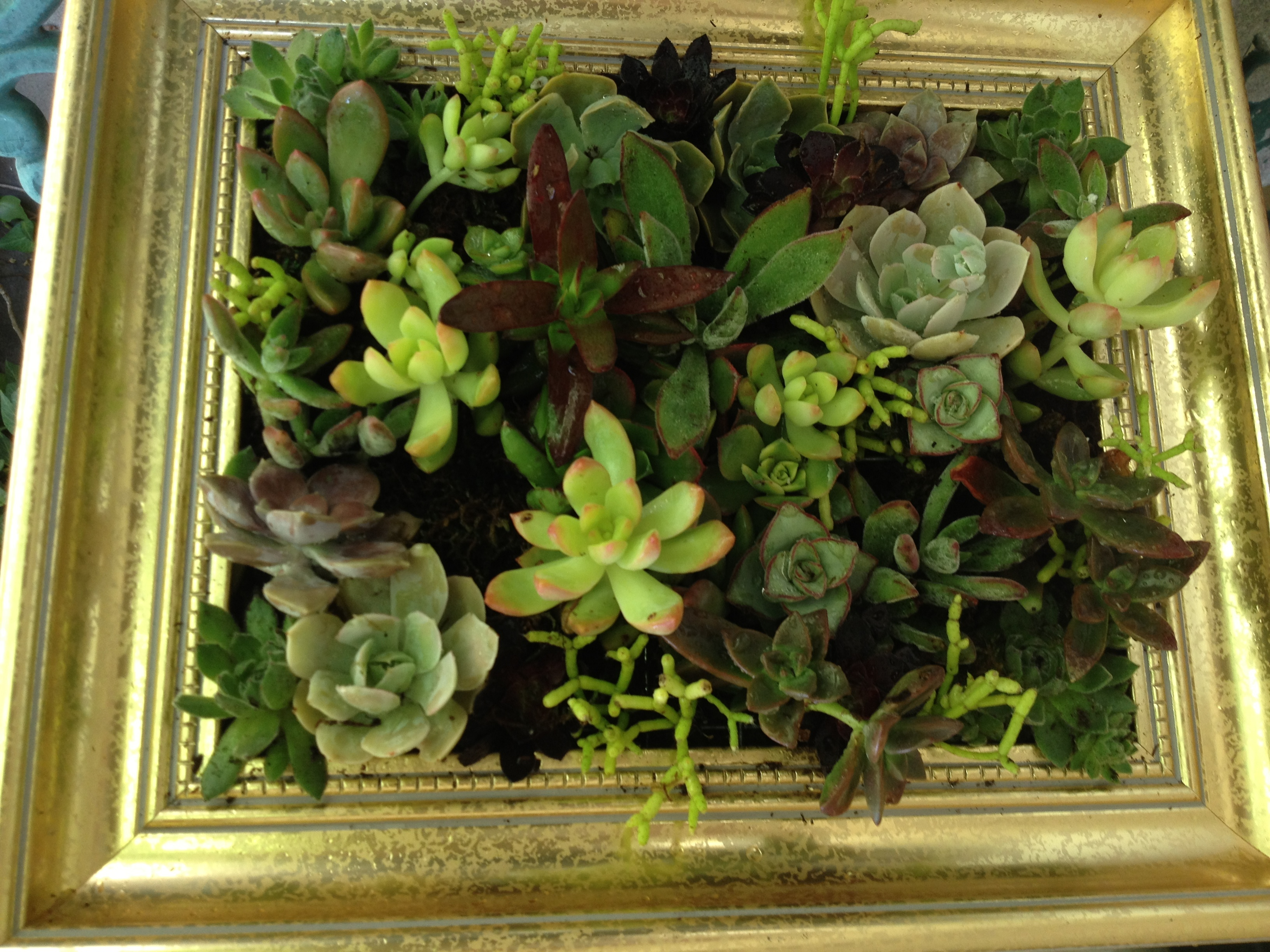 Gold Frame Of Succulents To Use As Patio Decor