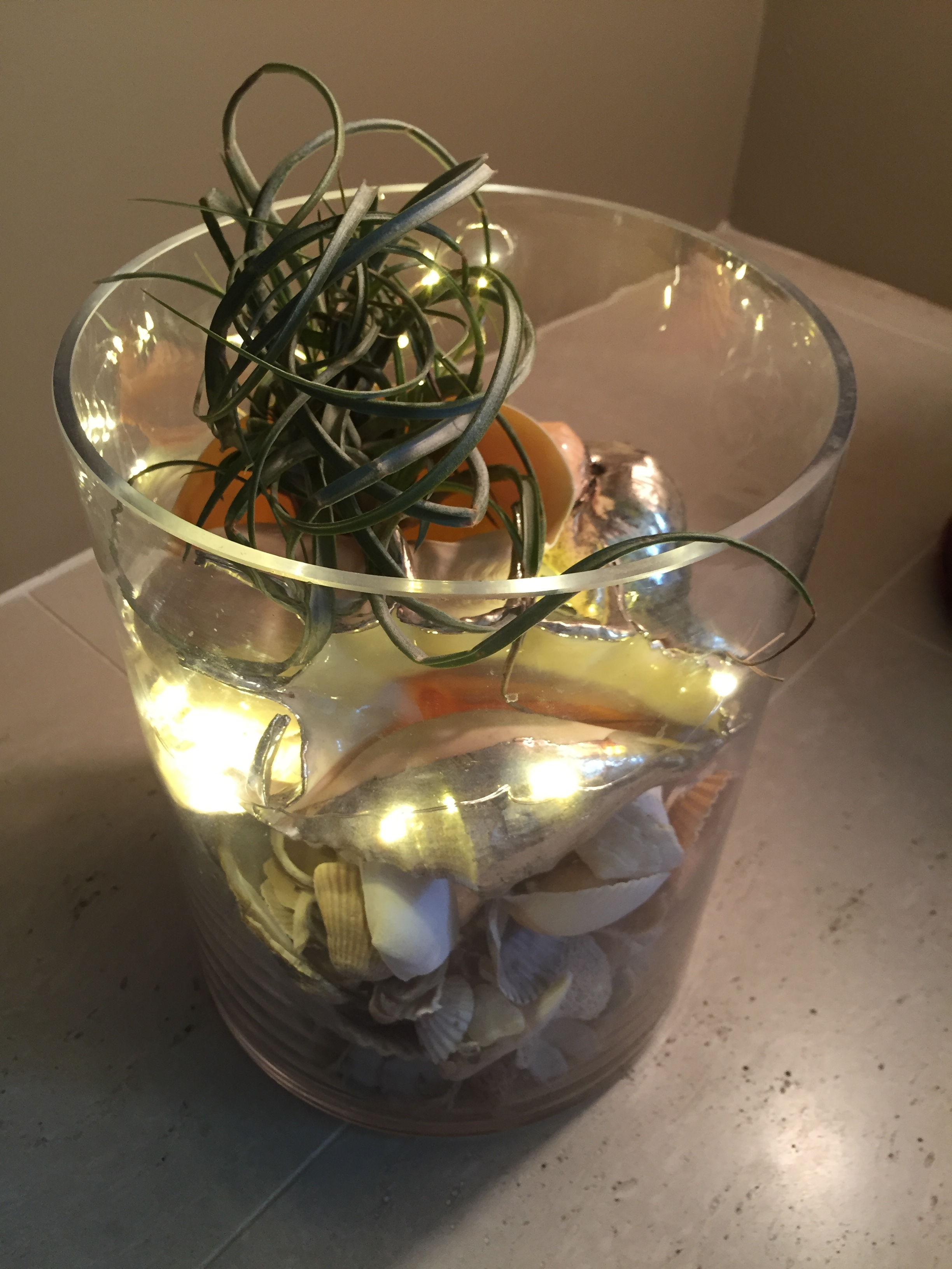 Air Plant Display Air Plants Fun Easy Plants To Care For And Display