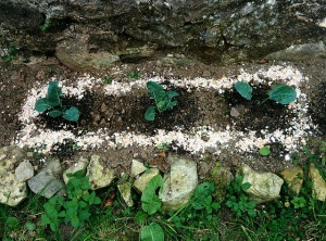Scattered crushed eggshells around the base of your plants to deter snails and slugs