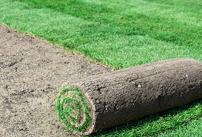 Pick the best types of grass for your lawn for Best grass for garden