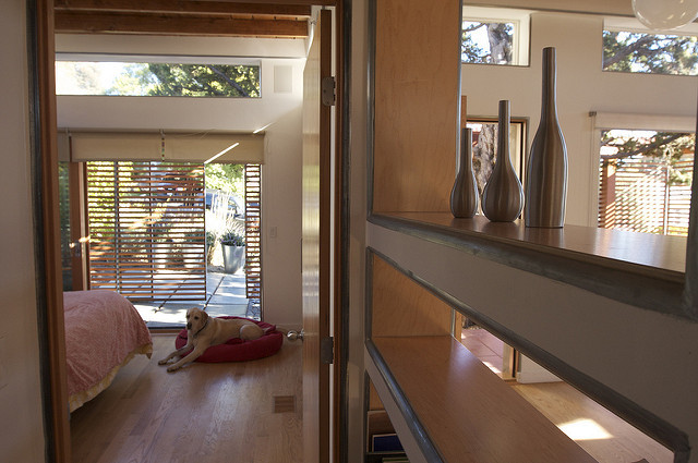 Room with dog and natural light shining in