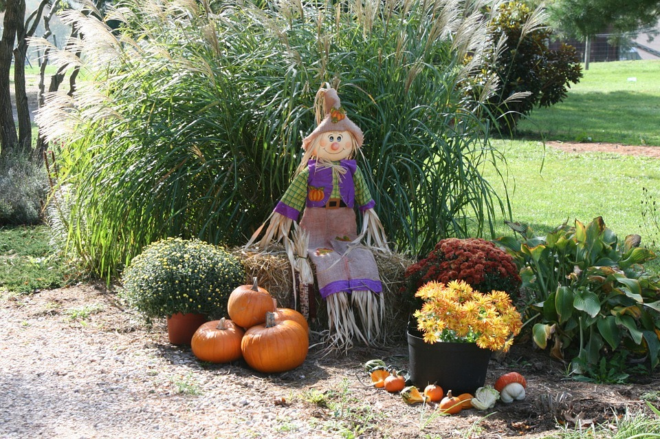 Lawn with pumpkins scarecrow and autumn flowers