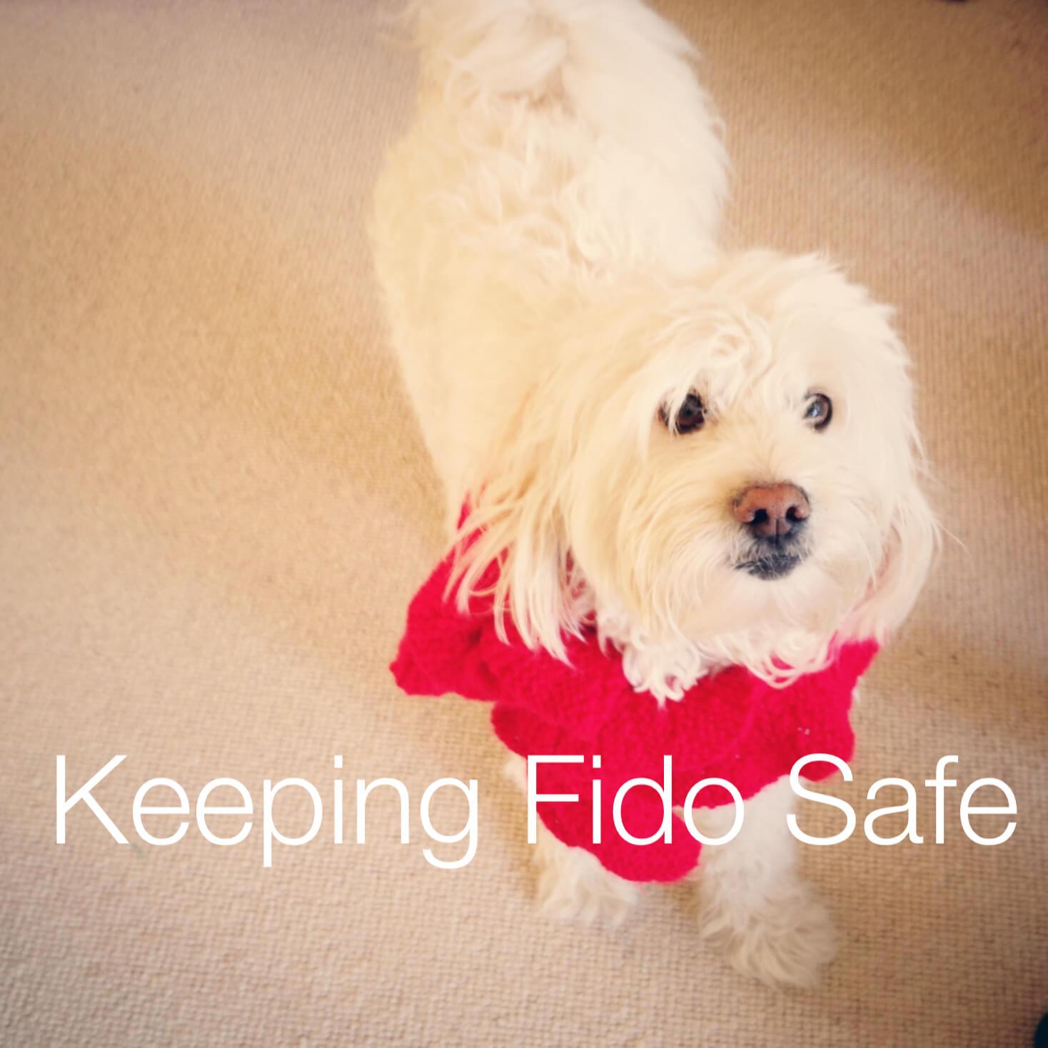 preventing pet theft