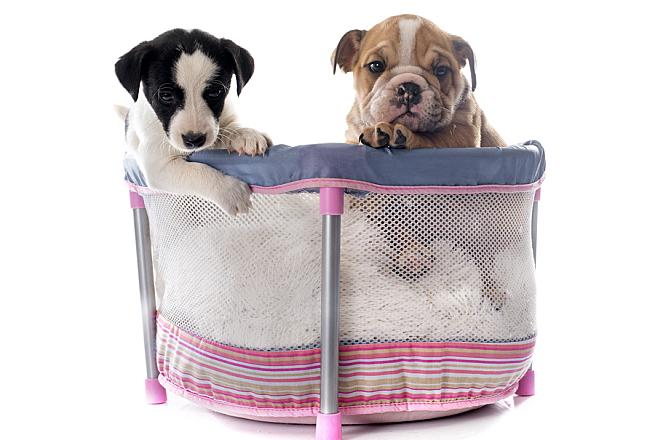 Entertain Your Furry Friends: Creating a DIY Pet Playpen